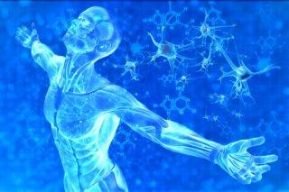 stem cells | Longevity LIVE