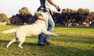 dogs   Longevity LIVE