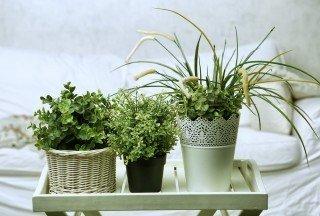 green plant home | Longevity LIVE