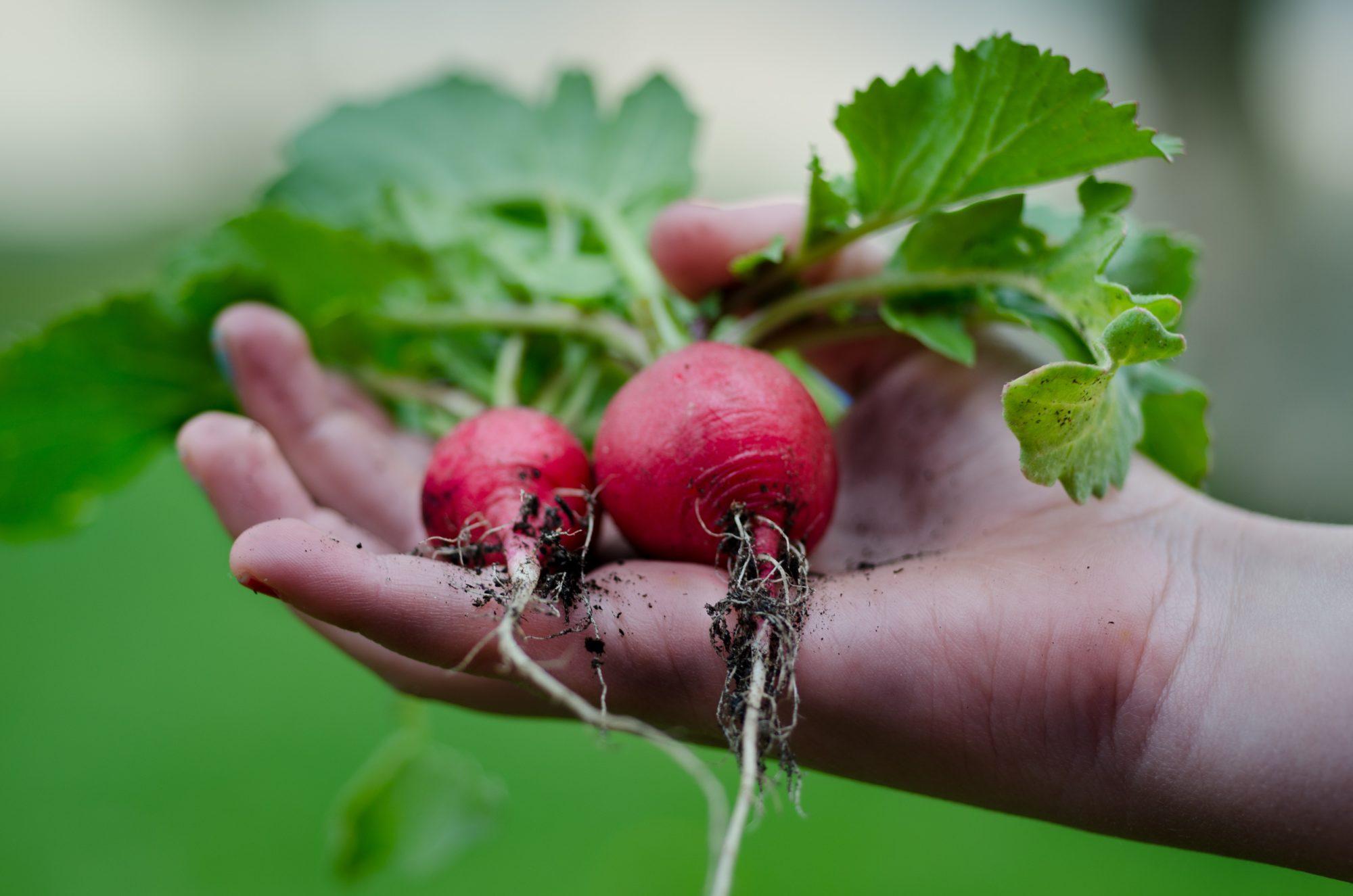 Gardening: Adopt This Hobby And Live Longer