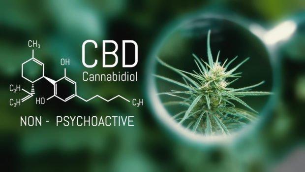CBD | Longevity LIVE