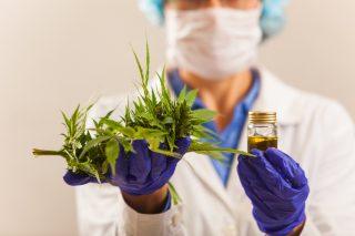 Endocannabinoid | Longevity LIVE