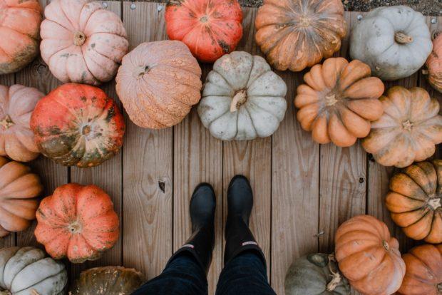 Pumpkin | Longevity LIVE