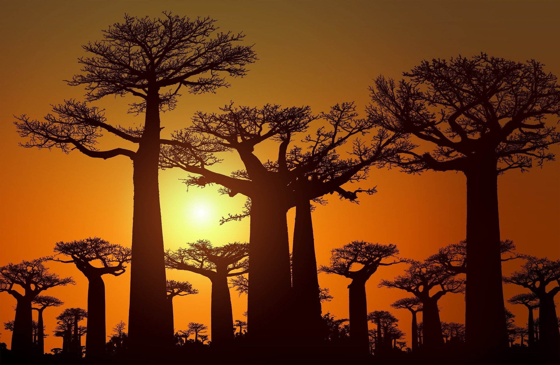 7 Reasons Why Everything Baobab Needs To Be On Your Food List