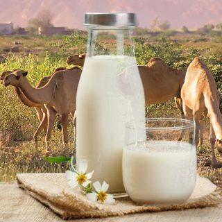 desert milk