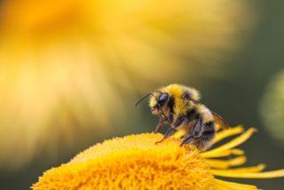 bees   Longevity LIVE