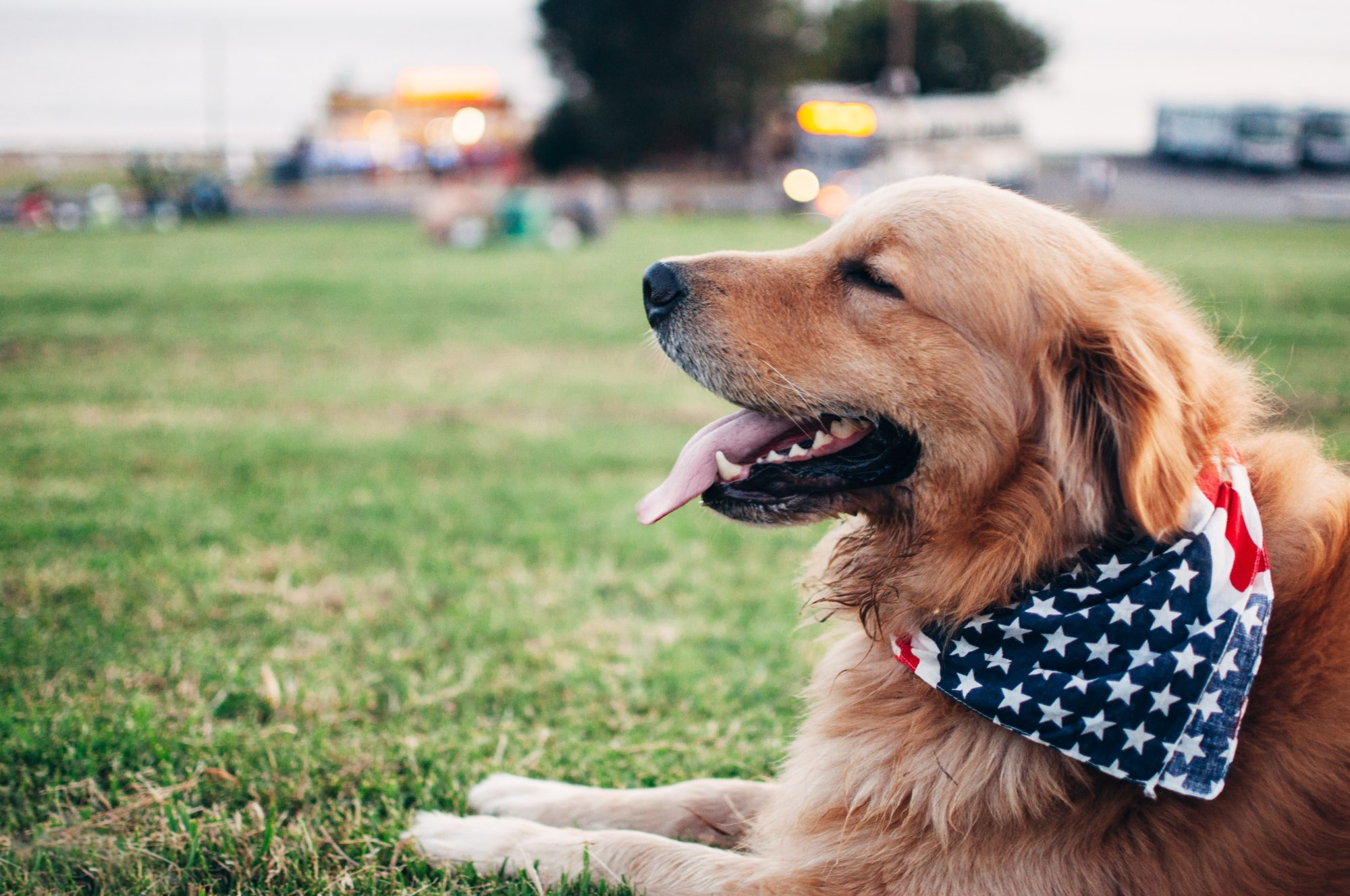 6 Myths About CBD for Dogs You Must Be Curious to Know