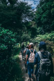 green ecotherapy and forest walks [longevity live]