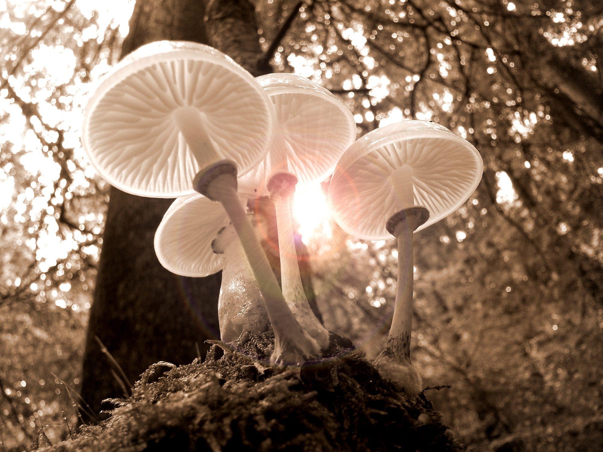 Psilocybin Mushrooms Are Making A Comeback