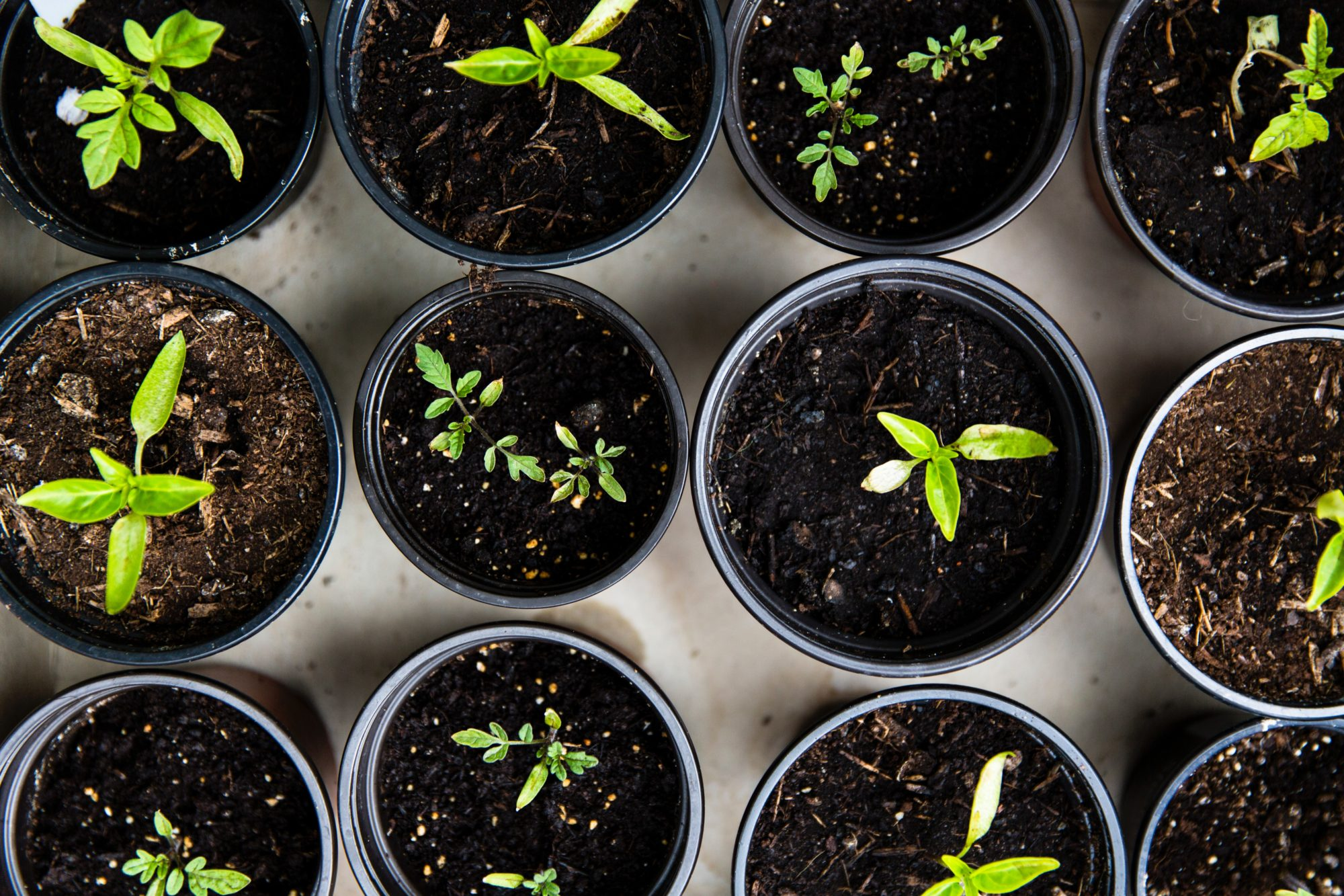 10 Sustainable Living Hacks While Sheltering