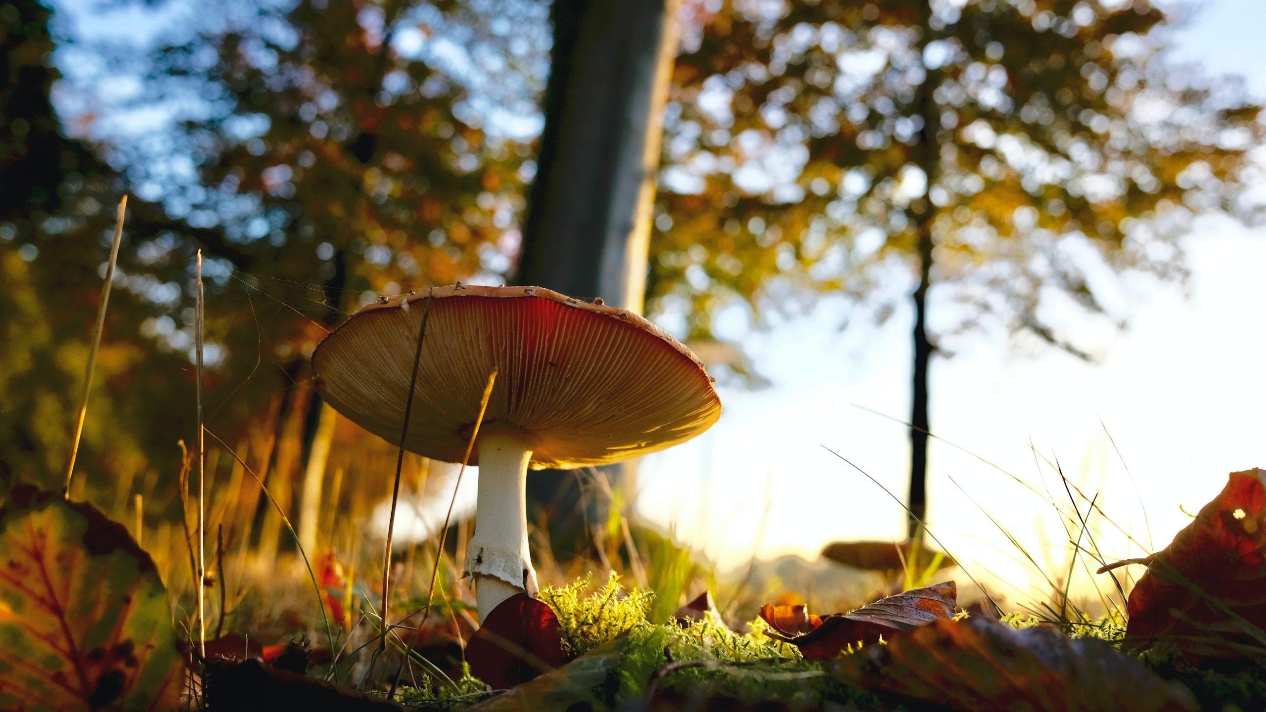 Plant-Based Meat Is Being Made Of Mushroom Varieties