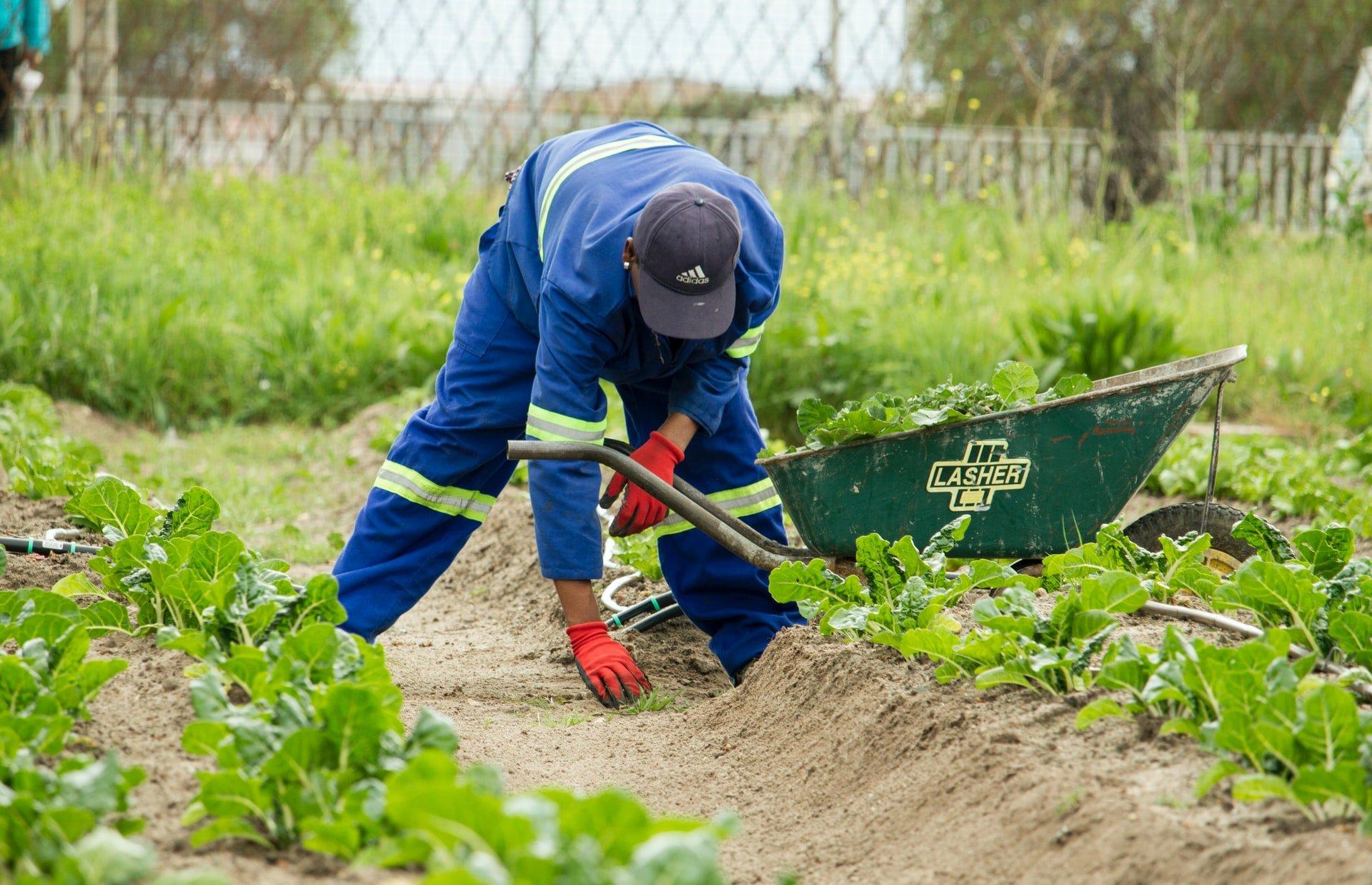 farming | Longevity LIVE