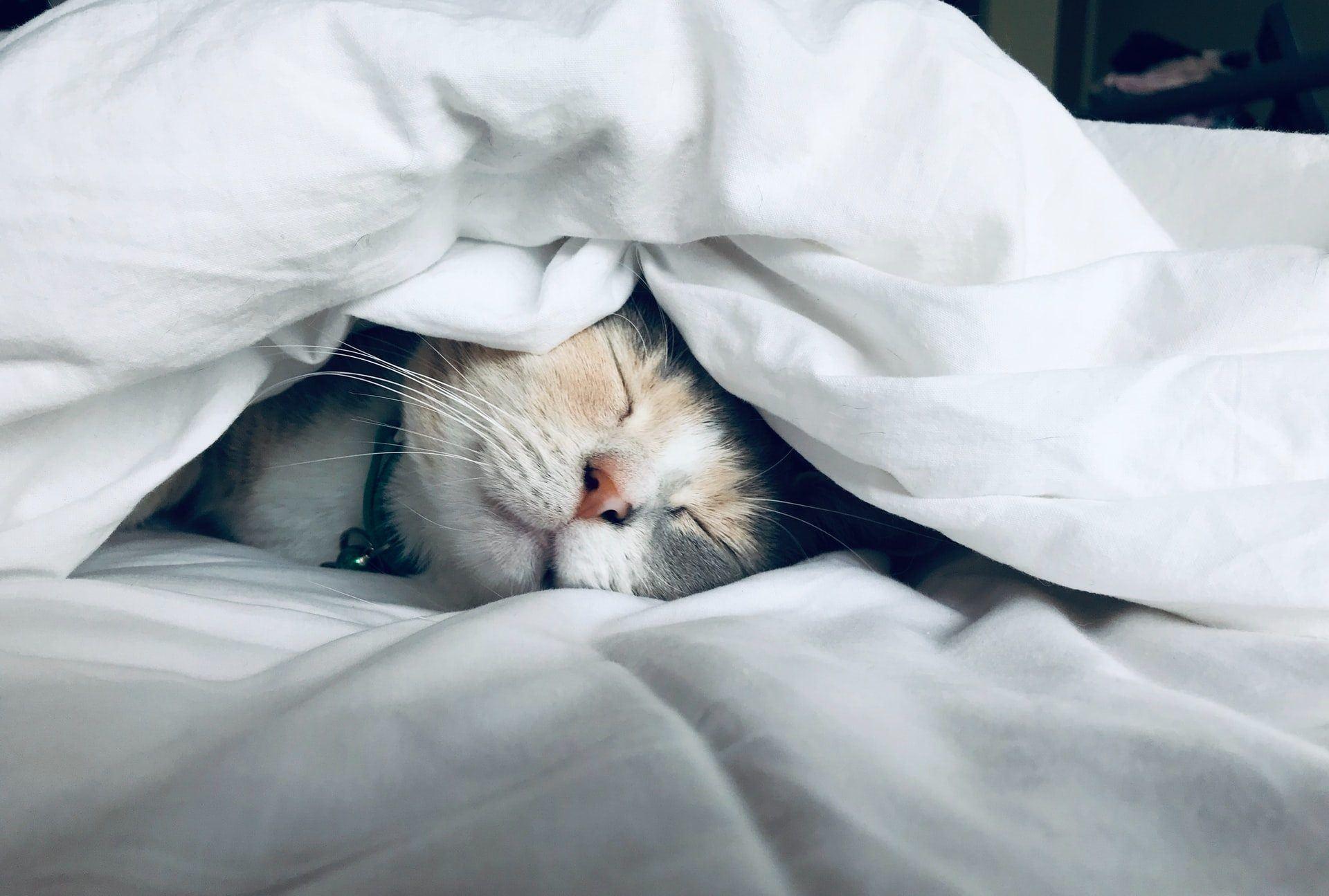Pet sleep