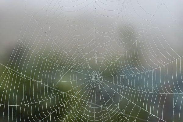 spider silk