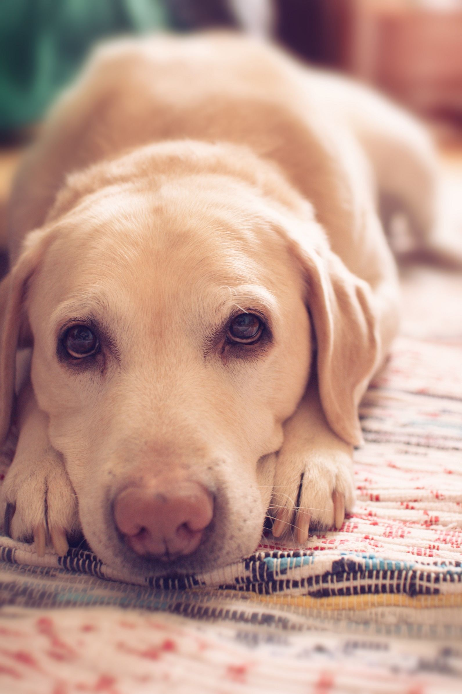 Why Your Pet Needs A Specialist Food To Balance The Gut Microbiome