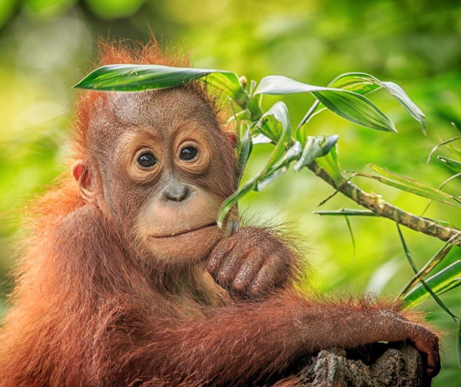 Opinion: Rethinking the War on Palm Oil